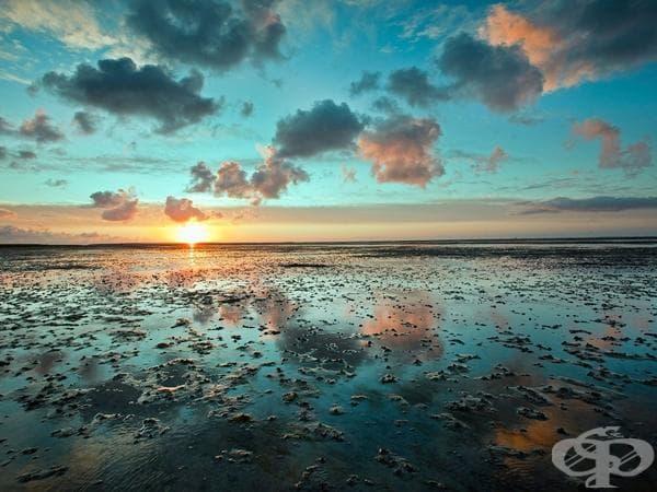 Wadden Sea - Холандия, Германия, Дания
