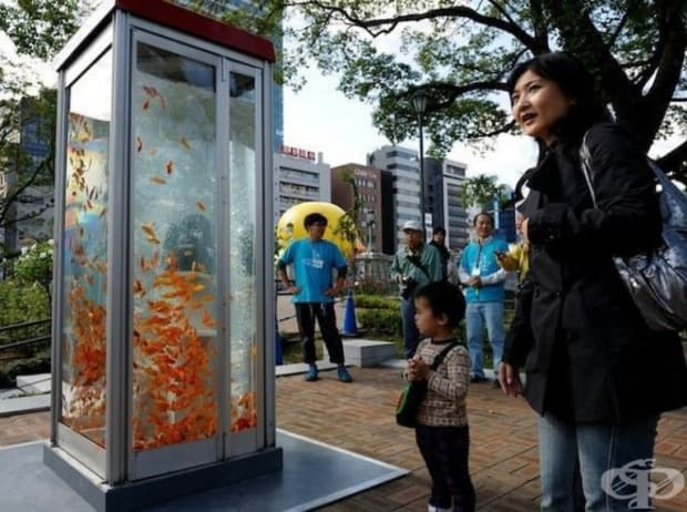 Япония превръща старите телефонни кабини в мини аквариуми.