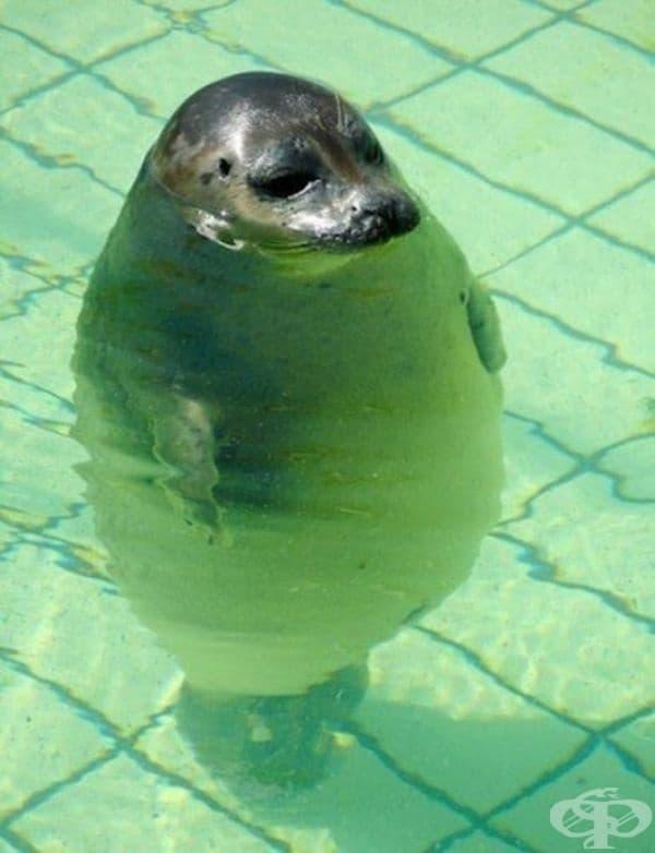 Тя изглежда доста впечатляващо, когато се скрие дори в най-малкия басейн.