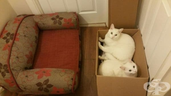"""Те ми казаха: """"Купи ново легло за котките. Те ще го заобичат!"""""""
