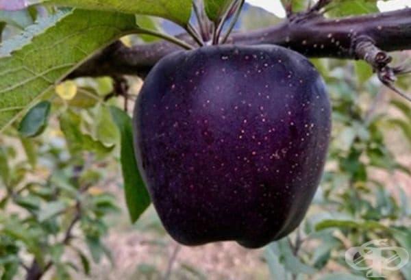 Вие бихте ли си купили такъв плод?