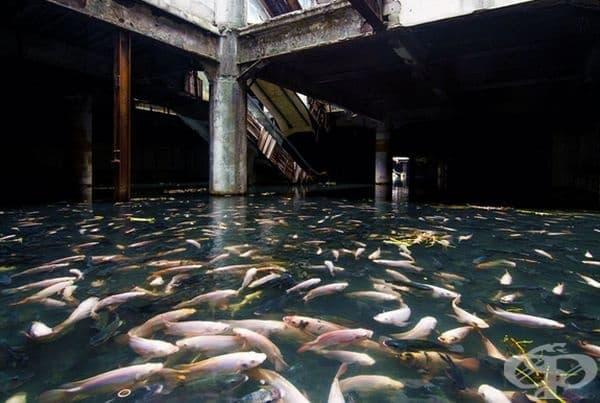 Хиляди риби превзеха изоставен търговски център.