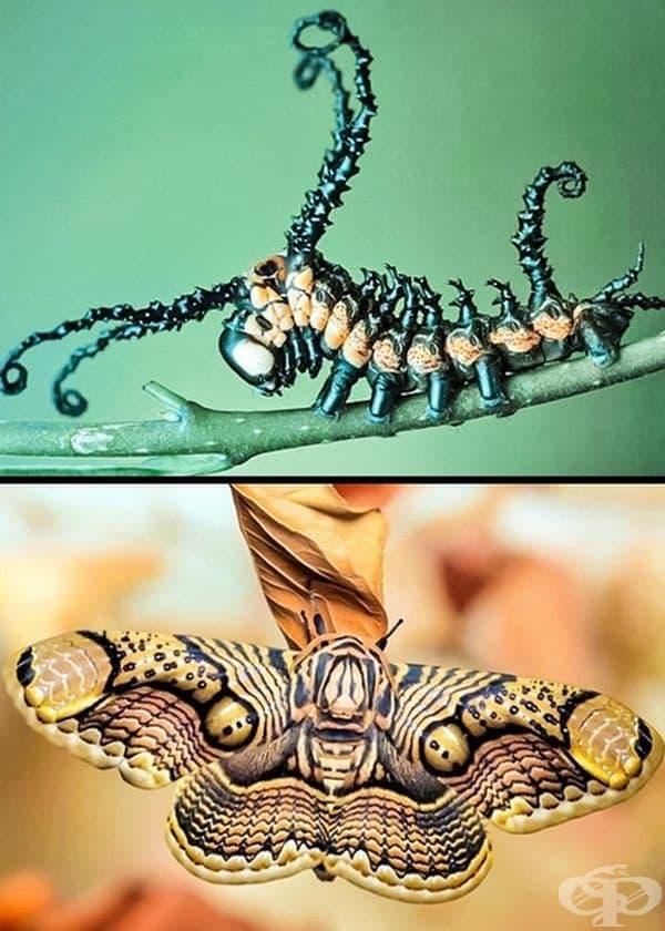 Чудесата на природата: преди и след метаморфозата.