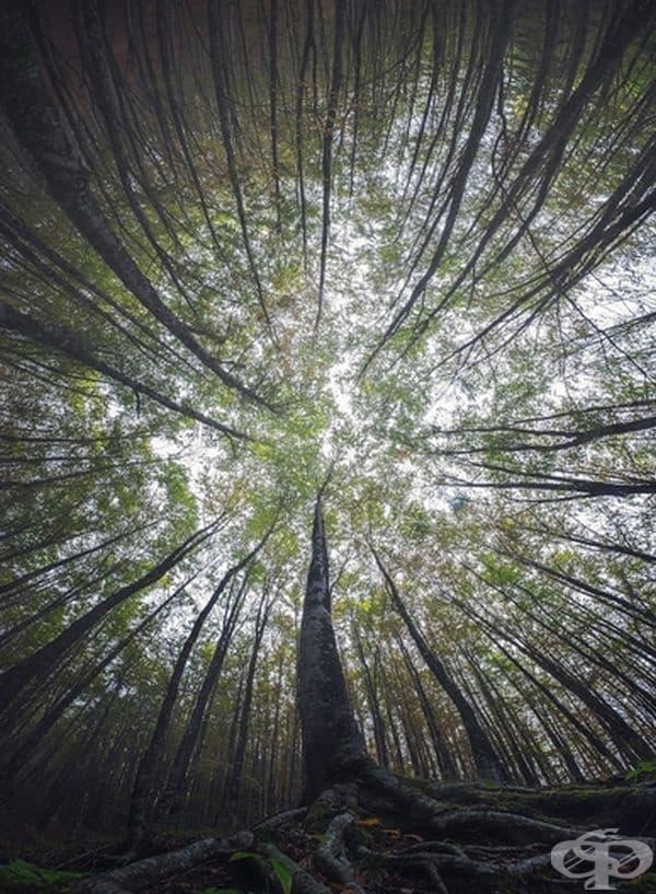 Магическата красота на гората, заснета отдолу нагоре
