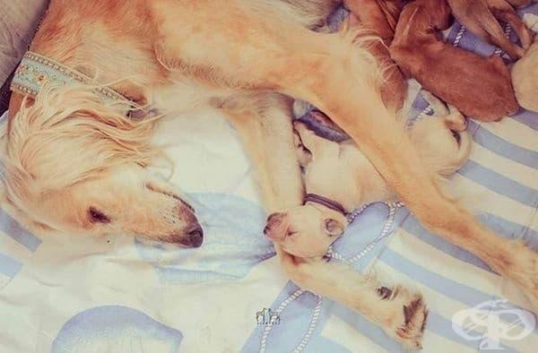 Всички майки се радват на моментите, в които децата спят.