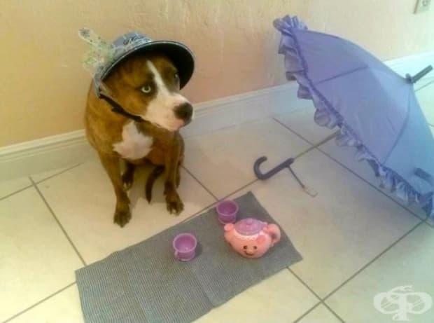 Дори страшните кучета се наслаждават на следобеден чай!
