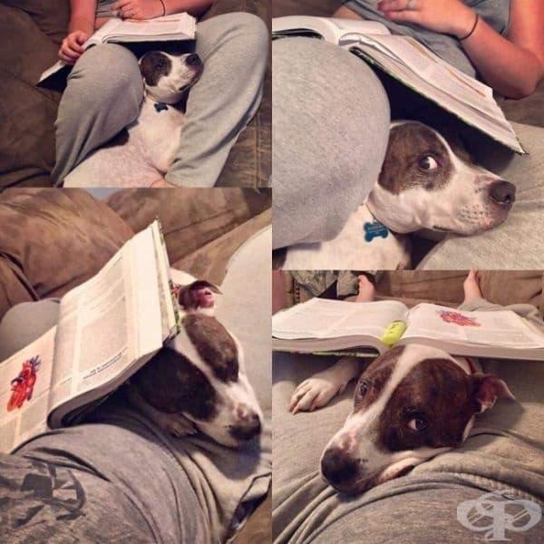 Забрави за домашното! Вместо него обърни внимание на домашния любимец!