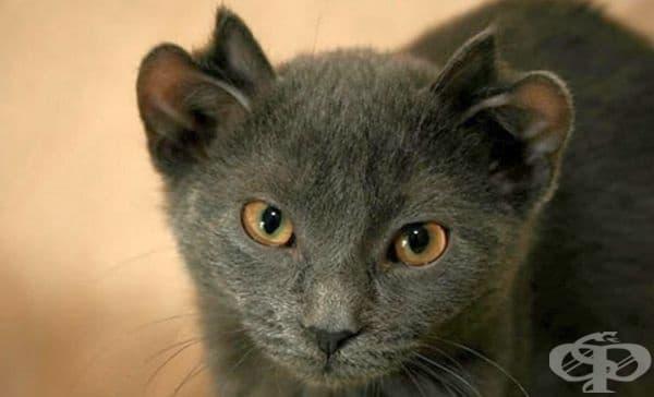 """Днес Йода е щастлива домашна котка с """"интересна мания към хляба""""."""