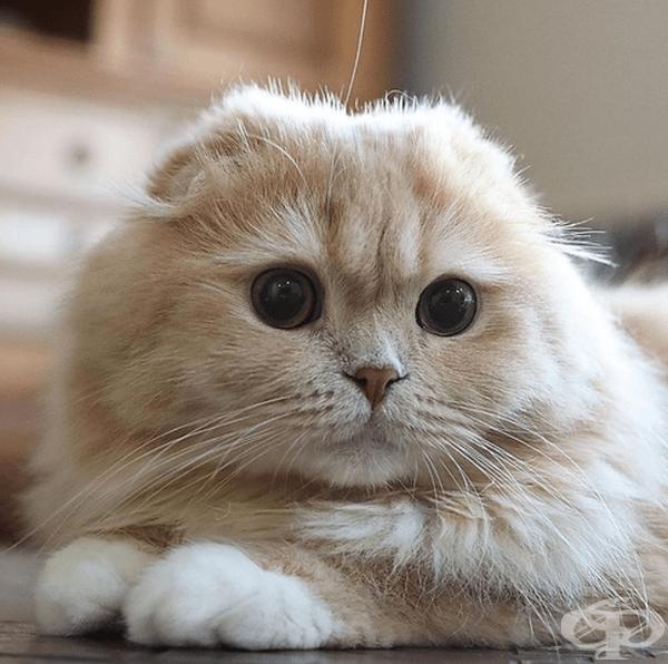 В момента котката е на 3 години и през май ще навърши 4.