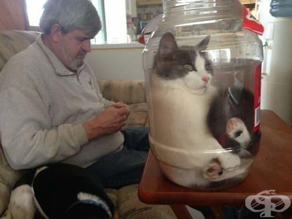 """""""Любимото място на моята котка."""""""