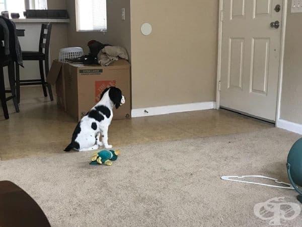 """""""Взехме си кученце преди две седмици. Днес го оставих за пръв път, тъй като започнах колеж и приятелят ми изпрати тази снимка."""""""