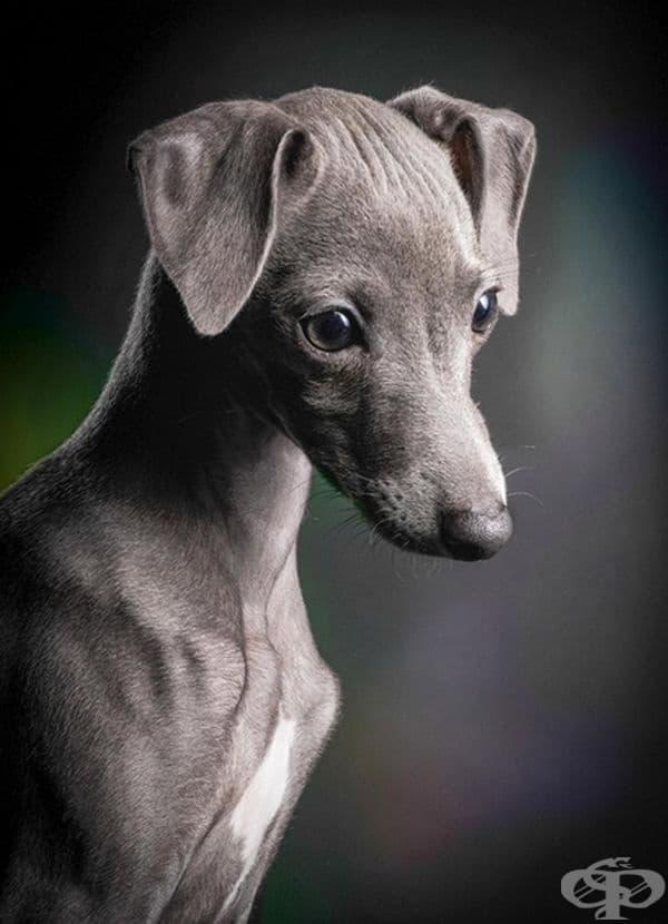 """Победител в категорията """"Кученца"""". Фотограф: Клаус Дби"""