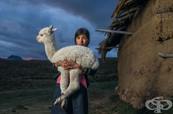 35 най-добри снимки в историята на National Geographic