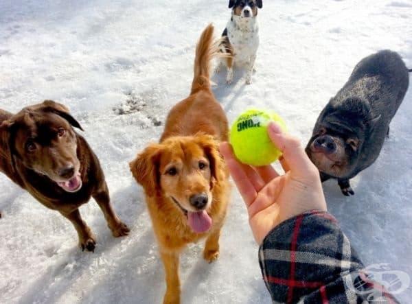 Видно е, той също иска топката.