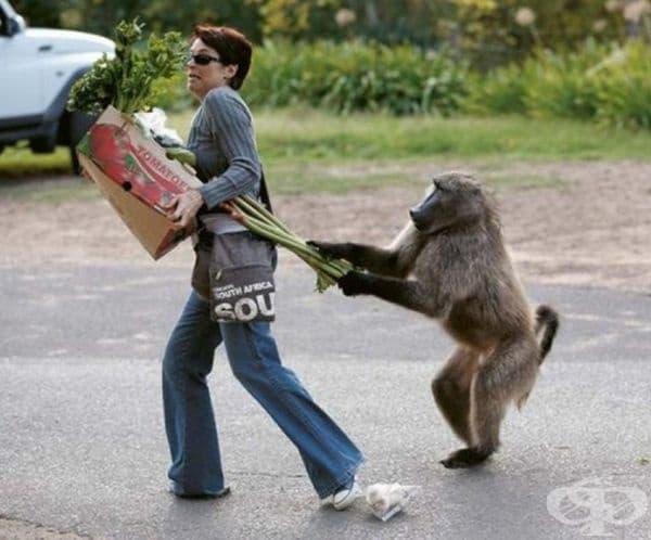 Просто гладна маймуна.