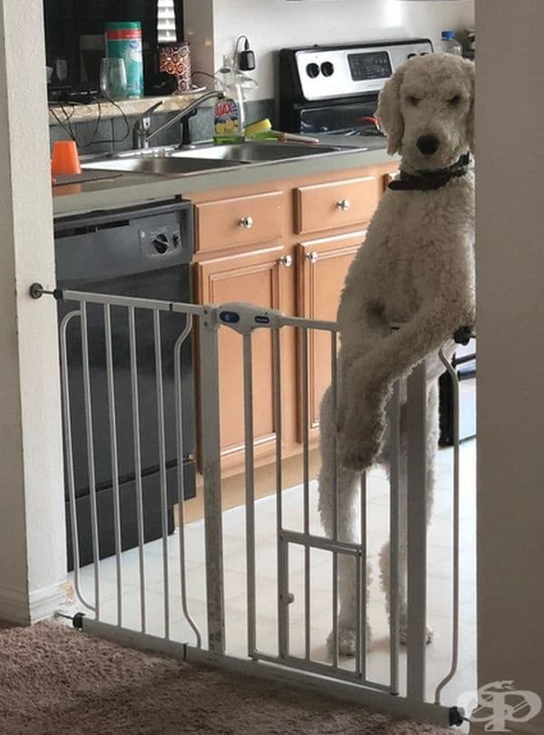 """""""Кучето ми прилича на охрана в нощен клуб."""""""