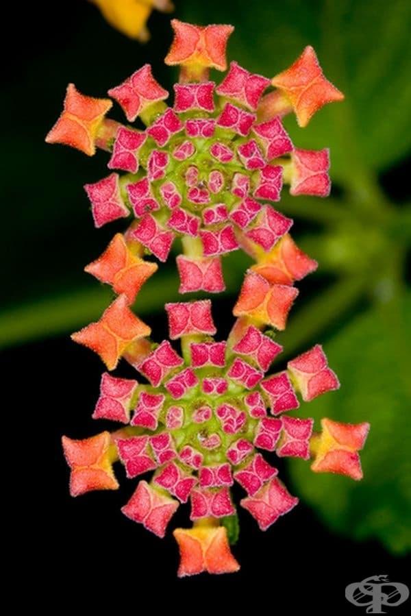 Цветя като скъпоценен килим.