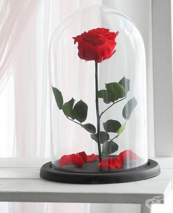 """За всички любители на приказките: розата от """"Красавицата и звяра"""". Това цвете е не само украшение, но и почит към чудесната история."""