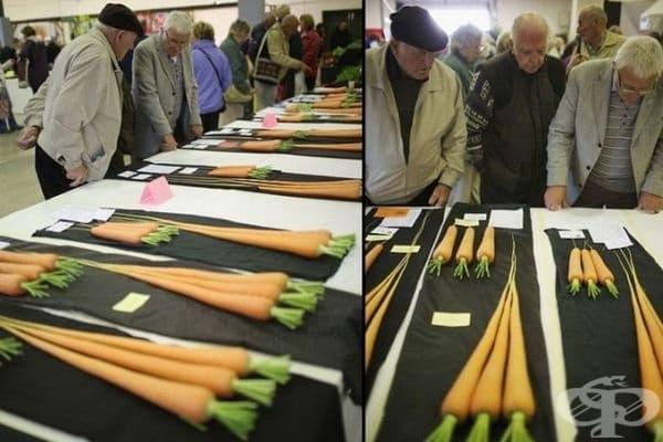 И тези моркови са удостоени с внимание.