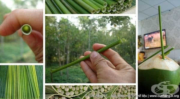 Към момента тези биоразградими сламки могат да се закупят само във Виетнам.