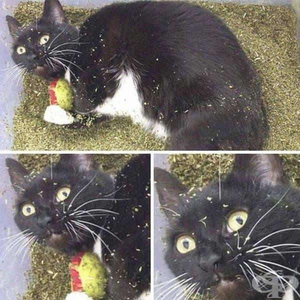 Котката е открила нещо ценно.