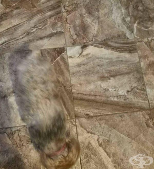 Кучето се слива с фона на плочките.