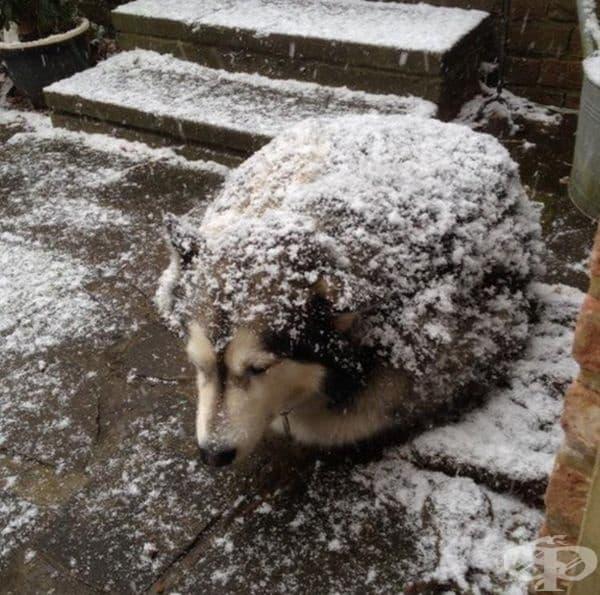 На пръв поглед кучето прилича на голям таралеж.