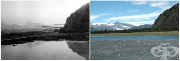 Ледник Мечка, Аляска (юли 1909 - август 2005).