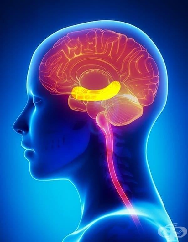 Подобряване на мозъчната активност. В ядките се съдържа доволно количество витамин Е и мастни киселини, които подобряват паметта. Отделно бадемите помагат срещу преждевременното стареене на мозъка.