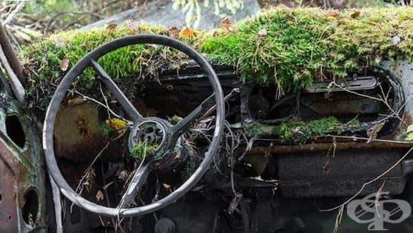 Всичко изоставено е в плен на природата.