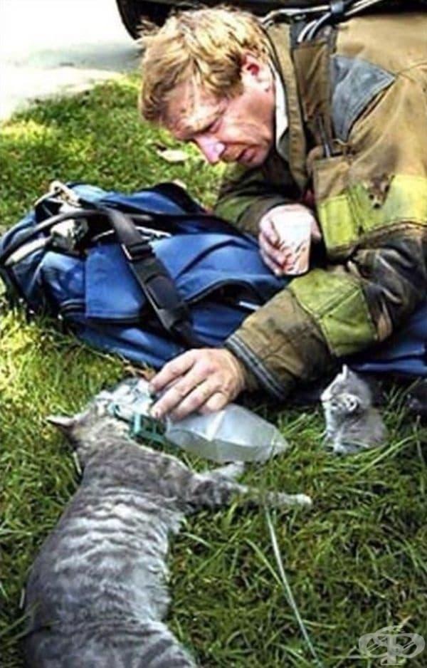 Пожарникар се опитва да спаси живота на котка, докато нейните малки са наоколо и наблюдават случващото се.