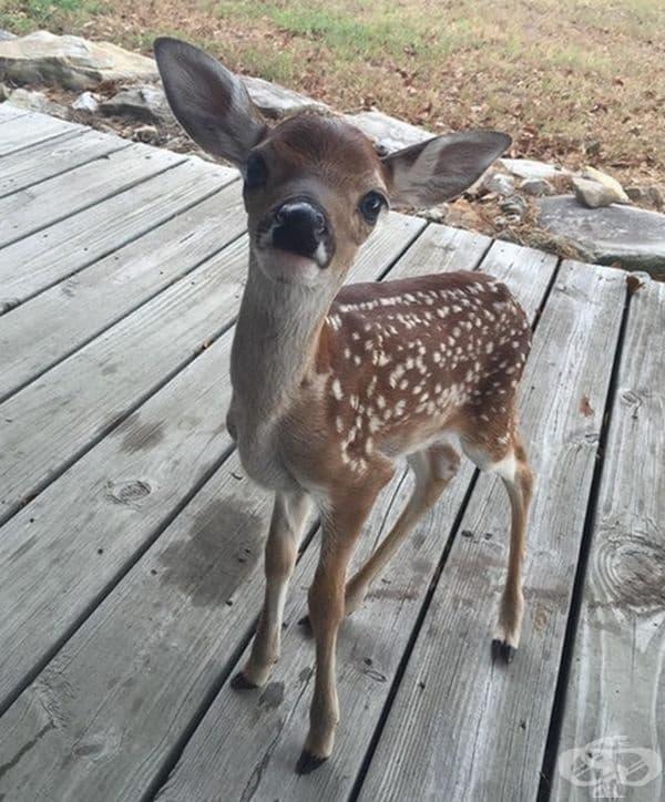 Малък сладък гост се появи на верандата ми.