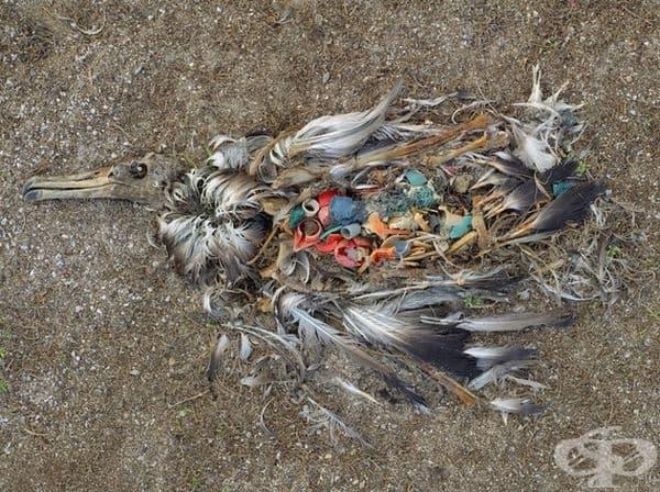 Птицата се е хранила с неразградими пластмасови отпадъци.