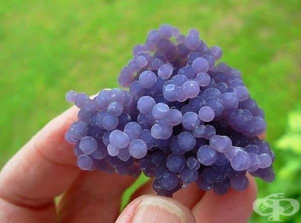 Това грозде определено не си струва да се опита, това е минерал, въпреки че изглежда много апетитно.