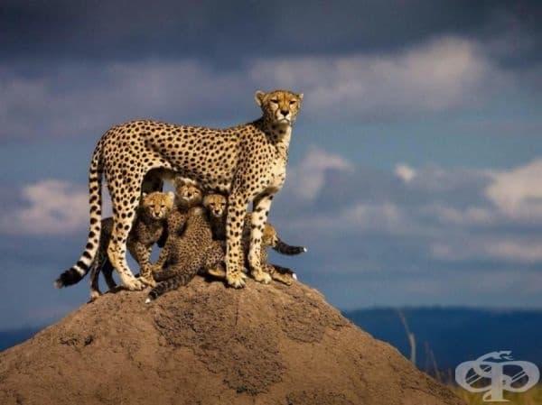 Майките са едни и същи навсякъде по света.
