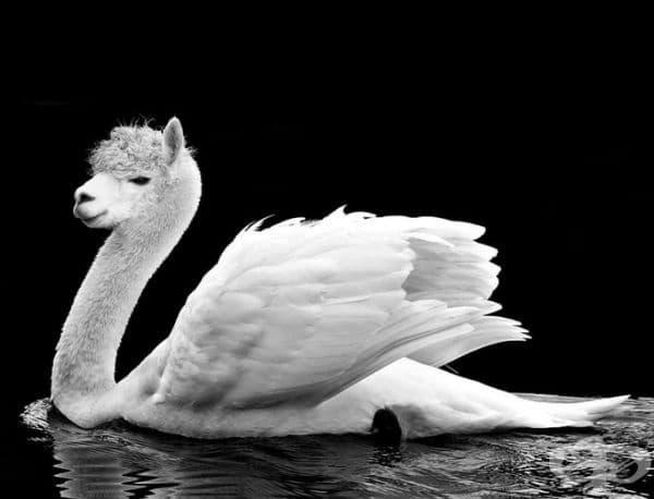 30 екзотични хибридни животни, които биха били любопитни в реалния живот
