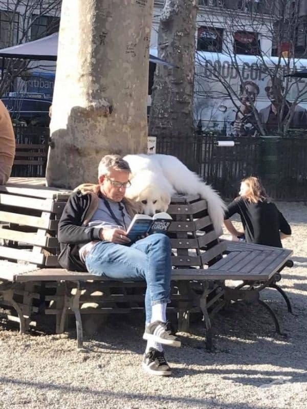 Докато другите кучета си играеха в парка, той държеше човека под око.