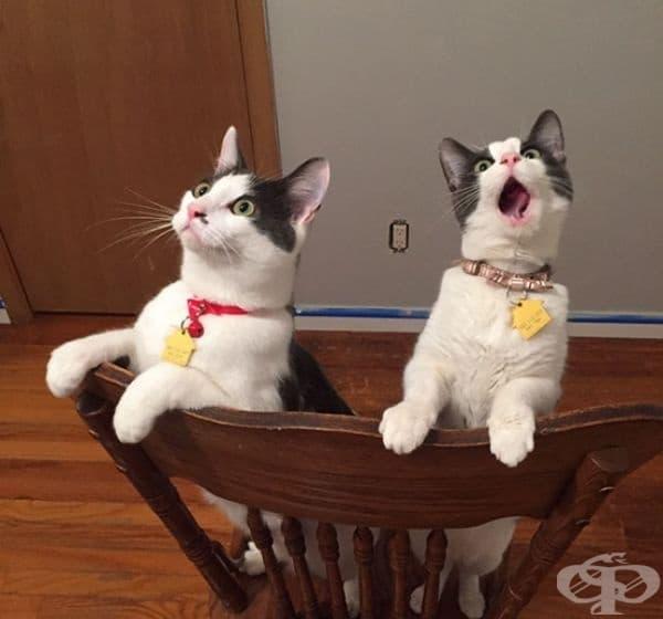 Тези котки забелязват вентилатора на тавана да работи за първи път.