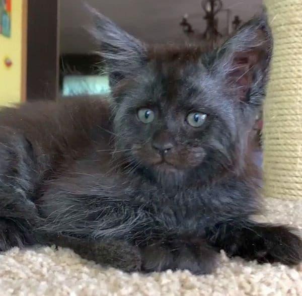 Кадрите на невероятната котка споделя нейната стопанка Татяна Расторгуева.