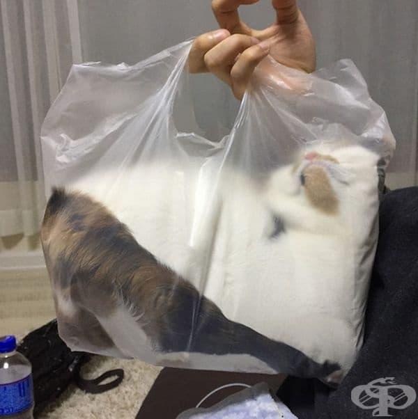 Котка в найлонова торбичка.