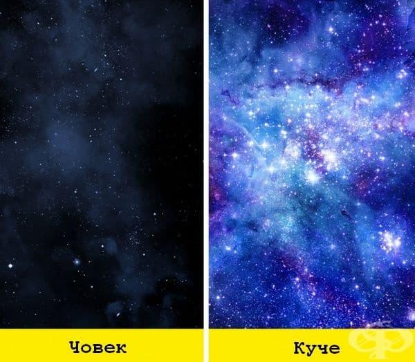 Хората рядко виждат звездното небе в пълния му блюсък, но кучетата дори в градска среда са в състояние да видят космическите обекти много ясно.