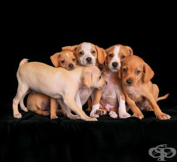 """Второто място в категорията """"Кученца"""". Фотограф: Чарли Нан."""