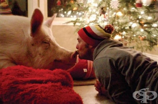 Според собствениците Естер е много дружелюбно прасе и обича да е сред хора.