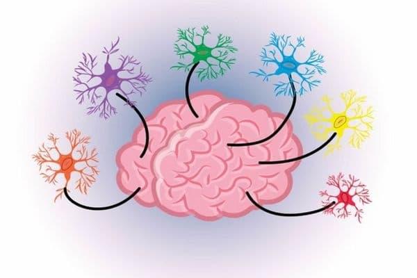 Нашият мозък никога не почива. Дори когато спим, нашият мозък продължава да работи. Нещо повече, по време на сън неговата дейност е дори по-интензивна, отколкото през деня.