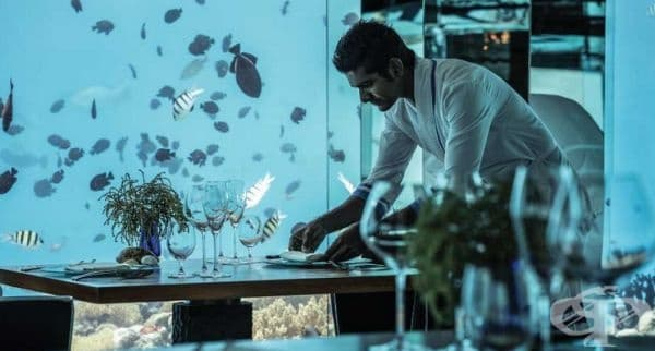 """Ресторант """"Sea"""", остров Баа Атол, Малдиви. Там е първата подводна винарска изба в света. Пред клиентите се разкрива интересна гледка към акули и костенурки."""