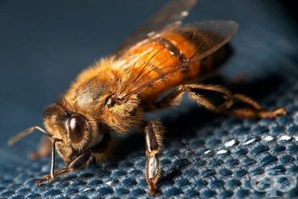 Опитайте да съскате пчелен дъх. Жуженето от пчела също може да окаже благоприятен ефект при понижаването на кръвното налягане.