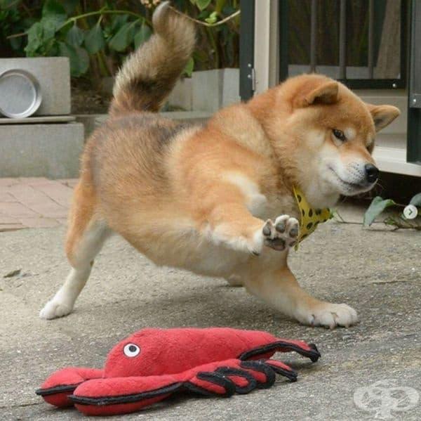 Тези кучета знаят как да се борят срещу най-страшното нещо... играчката.