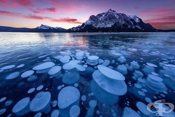 Замръзнали метанови мехурчета. Това са джобове, изпълнени с газ, които са били обхванати от леда при замръзване на водата. Срещат се в езерото Абрахам, провинция Алберта, Канада.