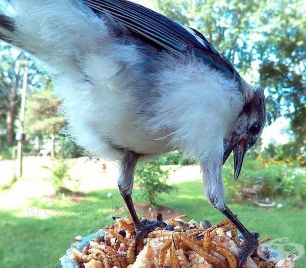 Ето какво се случва, когато оставите фотоапарат на хранилка за птици