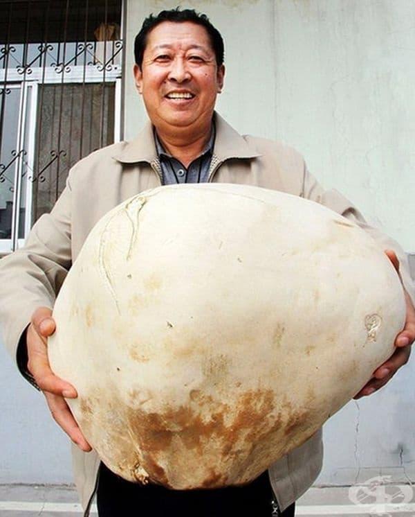 Ян Хуа от китайския град Юлин е собственик на гъба с тегло 4,5 кг.